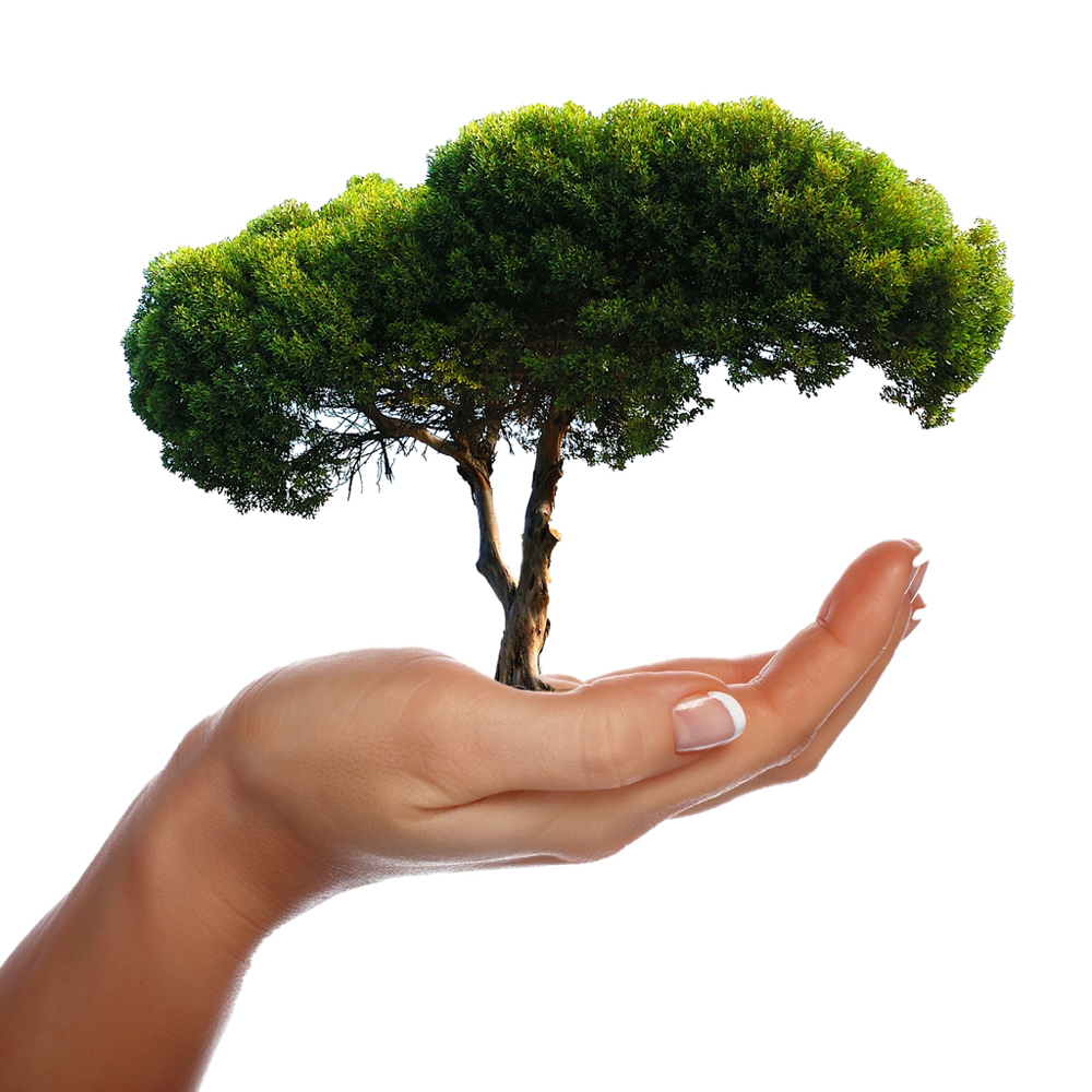Ağaç dikmek rüyaları